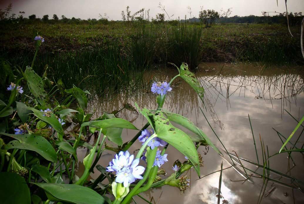 20090111_plants_016a
