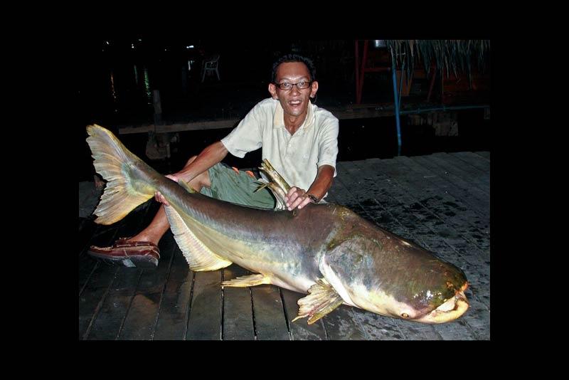 Fishing the Giant Mekong Catfish at Bung Sam Ran Thailand