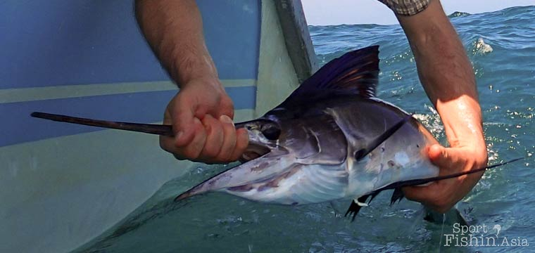 Juvenile Sailfish Suggests Kuala Rompin as Nursery and Spawning Ground for Pacific Sailfish