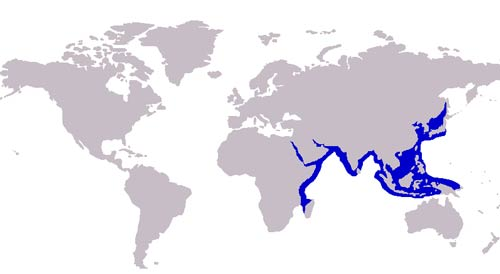 Carangoides_bajad_distribution