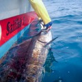 rompin-sailfish-charter_110902_7684