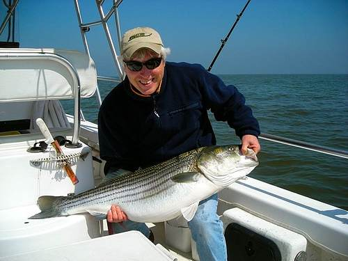 Striped-Bass-Fishing Maryland