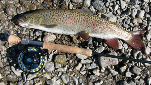 Fly-fishing-Mongolia-Lenok-