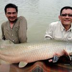 pirarucu_arapaima-gigas_fishing