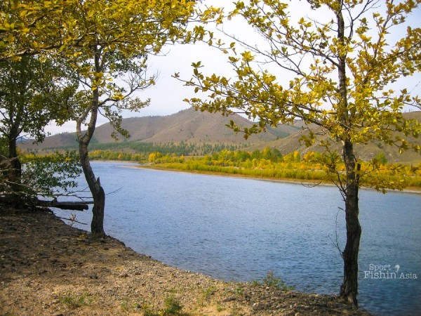 river-autumn-fall-scenery-fly-fishing-mongolia-