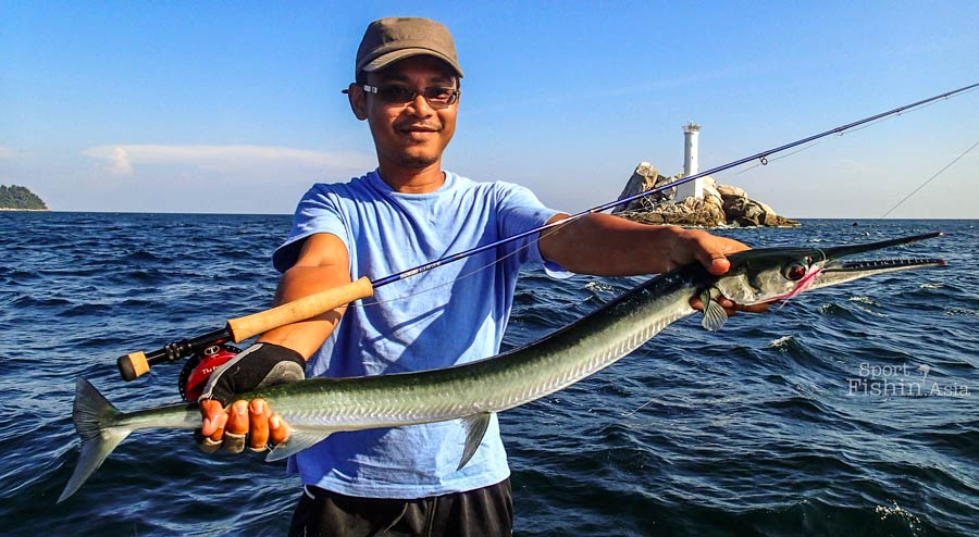 Longtom Garfish – Todak, Hound needlefish (Tylosurus crocodilus).