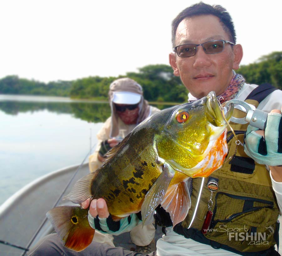 peacock-bass-fishing-with-spoon-malaysia