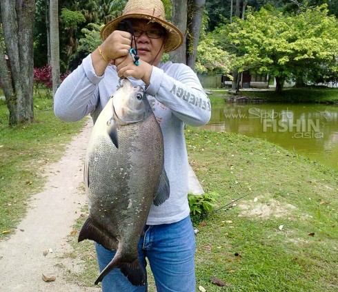 This hefty fish caught by Gary looks like a black pacu (Colossoma macropomum) or the tambaqui in the Amazon.