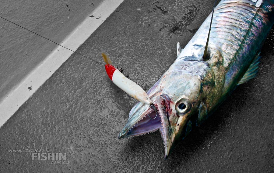 Spanish Mackerel Fishing Rigs Image Mag : rompin spanish mackerel tenggiri halco lure 57 280612 from imagemag.ru size 900 x 571 jpeg 107kB