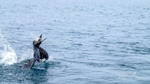 Jumping-Tailwalk-Rompin-Sailfish-121004