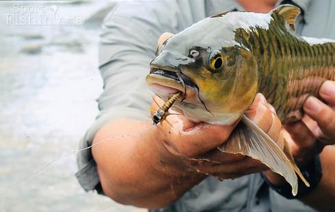 Mahseer Pelian Babagon Sabah Fly Fishing