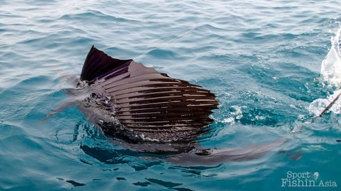 Rompin-Sailfish-121004_5068