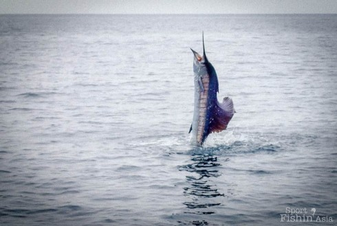 Rompin-Sailfish-Fishing-121004_4831