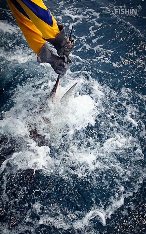 landing-trashing-sailfish-rompin-malaysia-121004_4851
