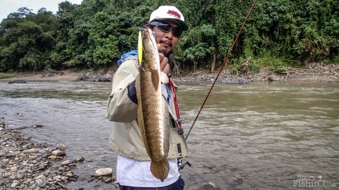 Sabah-Pelian-Mahseer_20130125_1390