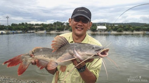 asian-redtail-catfish-natural-exotic-fishing-pond-rawang-130213-(4)-copy