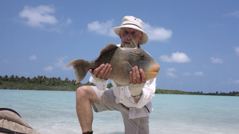 Titan Triggerfish on Fly at the Maldives by Mike Stevens