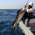 rompin-sailfish-alan_120725_3178