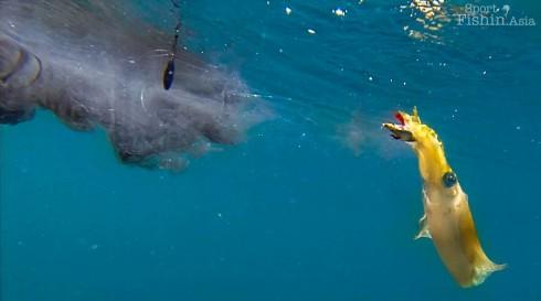 squid-fishing-kuala-rompin-malaysia-egging-