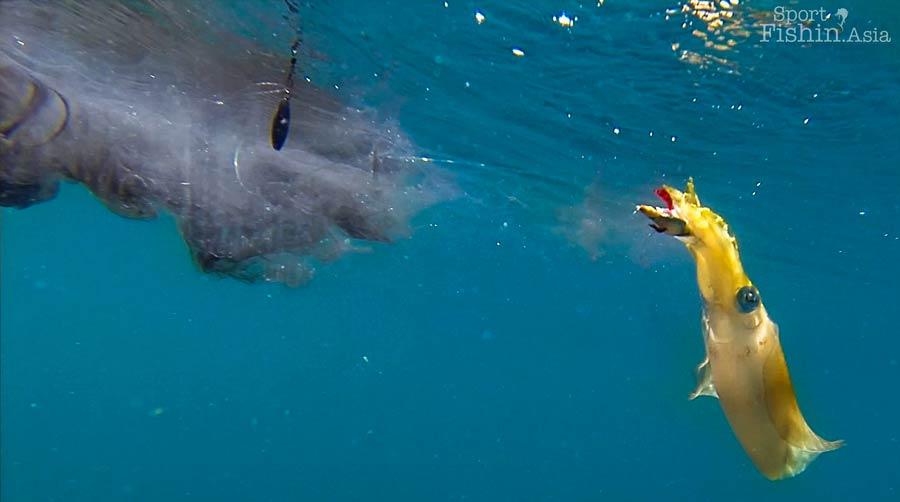 Kuala Rompin Malaysia  city photos gallery : squid fishing kuala rompin malaysia egging