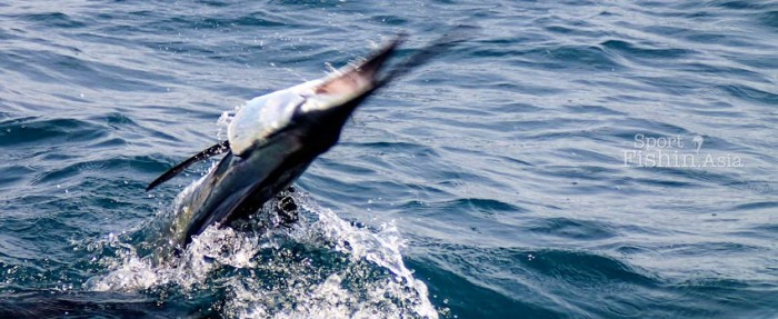 Rompin-sailfish-fishing-charter_130723_5024--
