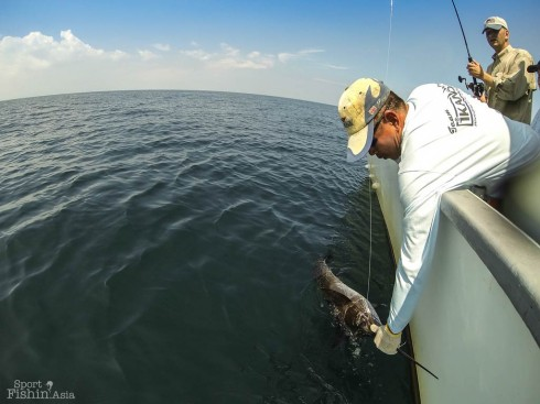 rompin-sailfish-fishing-charter_130701_4596