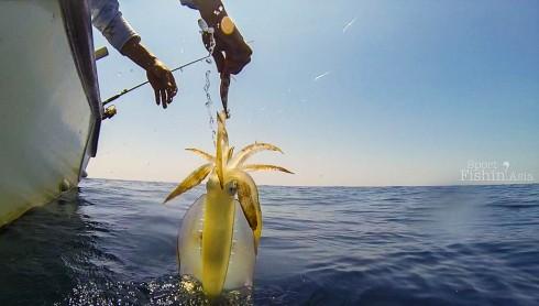 squid-jigging-egging-kuala-rompin-sailfish