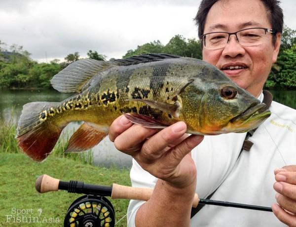 peacock-bass-fishing-malaysia-peacock-bass-fishing-malaysia-2013-10-13-08.49_11