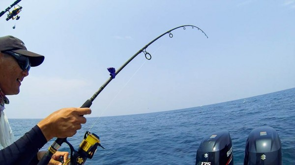 penn-spinfisher-v-6500-legion-rod-sailfish