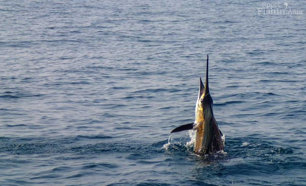 Rompin-sailfish-fishing-charter_130722_5354
