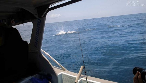 Rompin-sailfish-fishing-charter_130724_4922