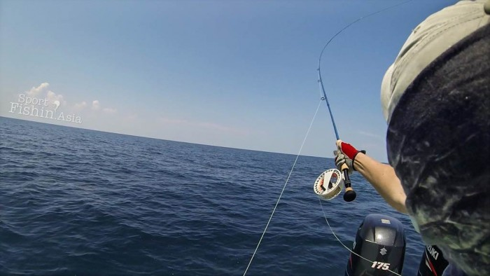 Fly casting to free swimming sailfish is the toughest and also the most rewarding way to catch a sailfish on fly