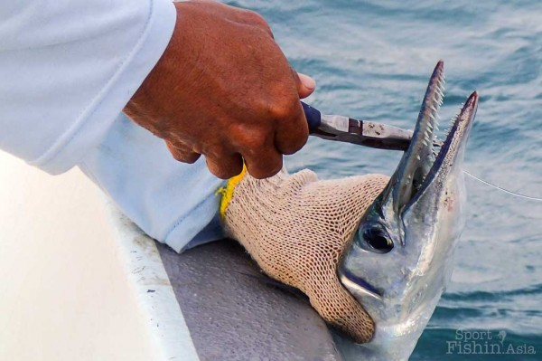 gar-fish-Rompin-sailfish-fishing-charter_130723_4959