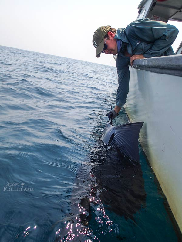 saul-mackay-Rompin-sailfish-fishing-charter_130722_5327