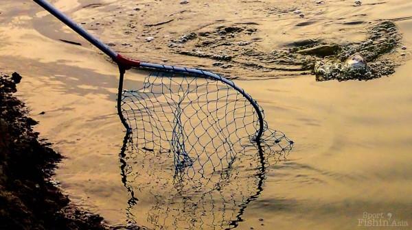 Redfish-fly-fishing-malaysia_140117_7745-