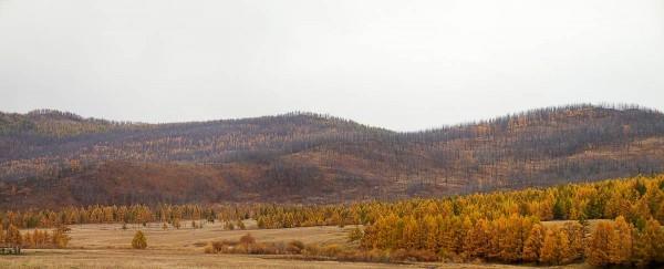 mongolia-autumn-landscape-scenery