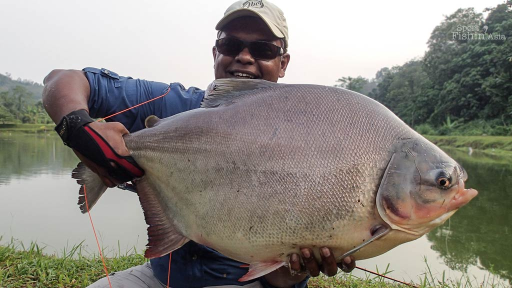 Fly Fishing for Monster Pacu [video]