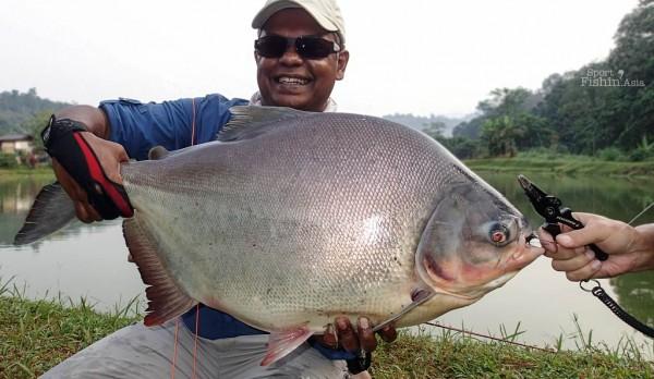 big-pacu-fly-fishing-malaysia-140202_8018