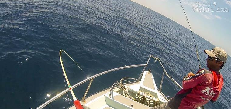 Light jigging spanish mackerel at Kuala Rompin [video]