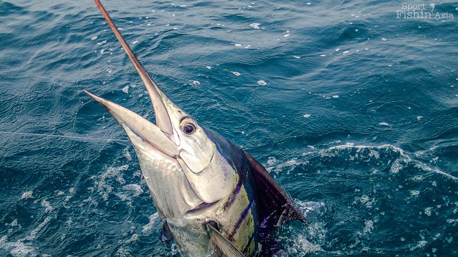 Kuala-Rompin-sailfish-121004_4991