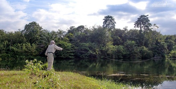 bob-peacock-bass-fly-fishing-malaysia-casting