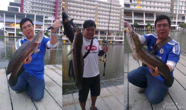 Three nice haruan early on, the lucky angler in blue had a good morning, he landed two.