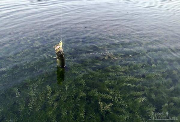 peacock-bass-fly-fishing-malaysia_131030_7123