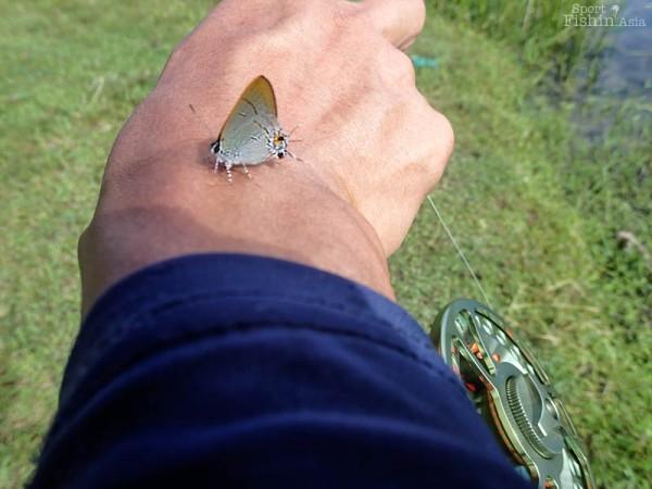 peacock-bass-fly-fishing-malaysia_131030_7135