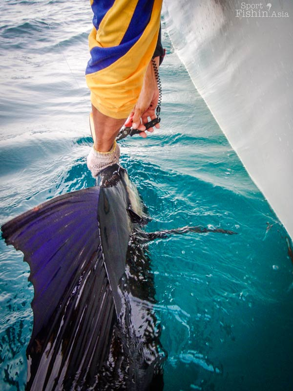 Kuala-Rompin-sailfish-casting-popping_