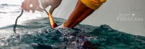 casting-lures-kuala-rompin-sailfish-_120724_3280