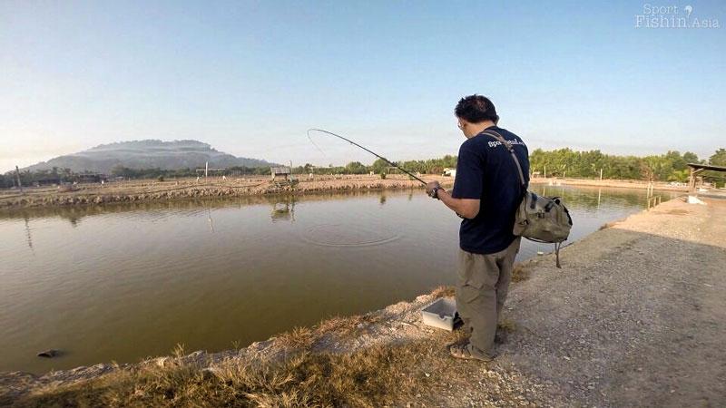 Saltwater pond fishing jugra banting for Saltwater fish pond