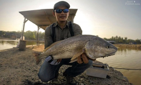 redfish-red-drum-jugra-banting-fishing_-(7)