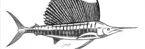 sailfish-drawing-sketch