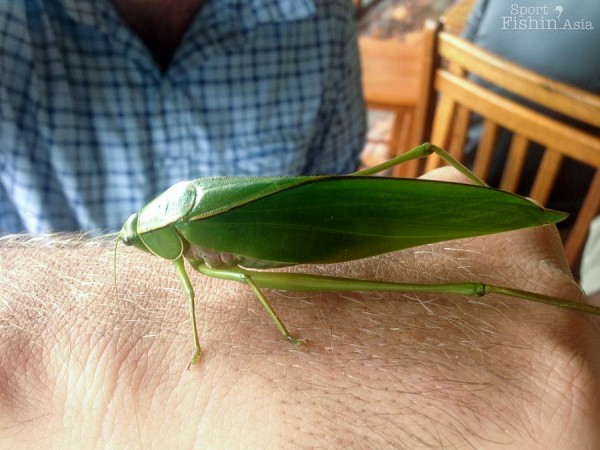 Grasshopper on Gavin's hand. If you live bugs, you will love this place.